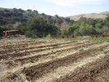 Preparing the Soil with CoverCrops